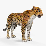Leopard with Fur 3d model