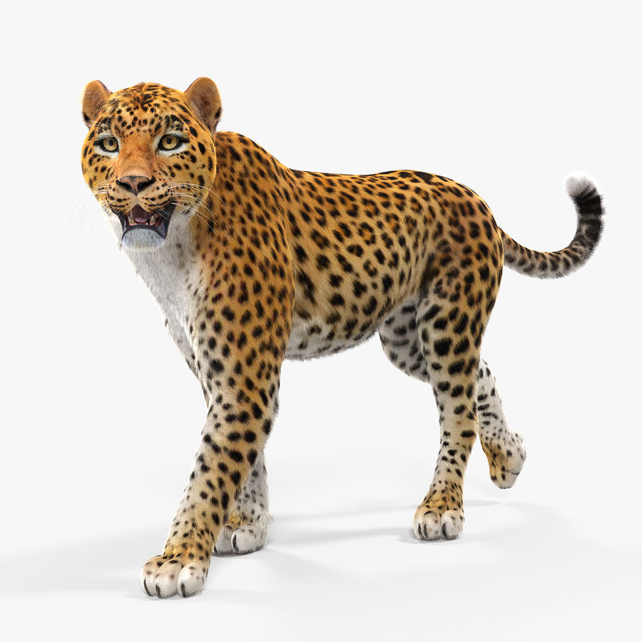 Leopard Walking Pose with Fur royalty-free 3d model - Preview no. 1