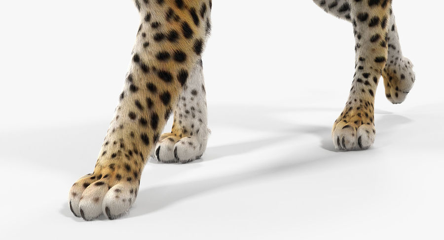 Leopard Walking Pose with Fur royalty-free 3d model - Preview no. 10