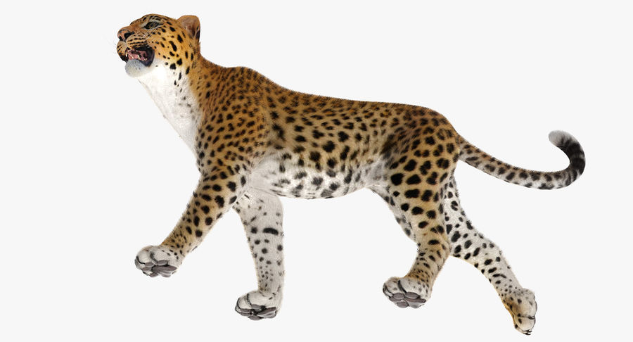 Leopard Walking Pose with Fur royalty-free 3d model - Preview no. 9