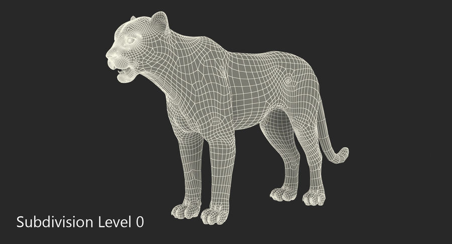 Snow Leopard with Fur Rigged royalty-free 3d model - Preview no. 22