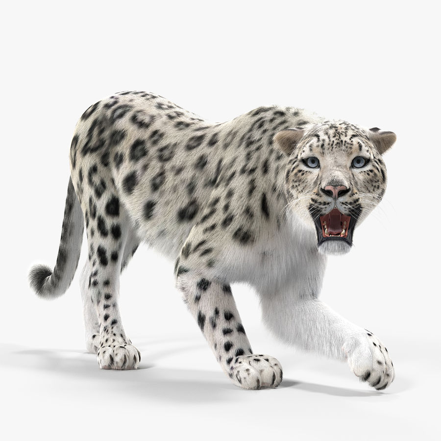 Snow Leopard with Fur Rigged royalty-free 3d model - Preview no. 1