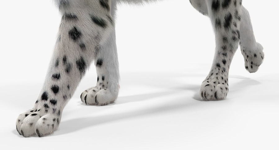 Snow Leopard with Fur Rigged royalty-free 3d model - Preview no. 19