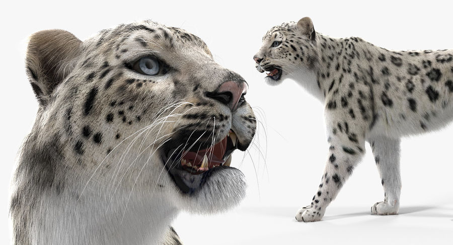 Snow Leopard with Fur Rigged royalty-free 3d model - Preview no. 16