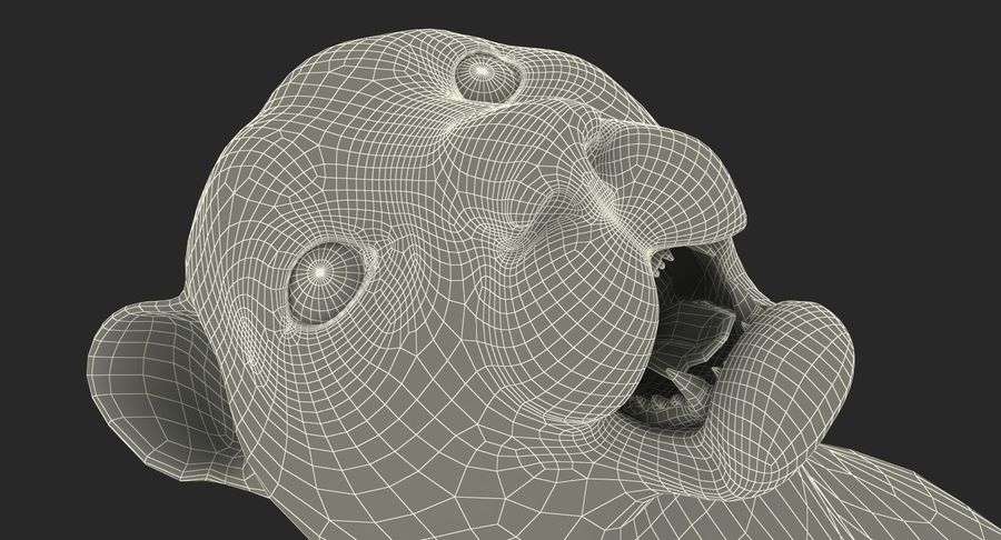 Snow Leopard with Fur Rigged royalty-free 3d model - Preview no. 28