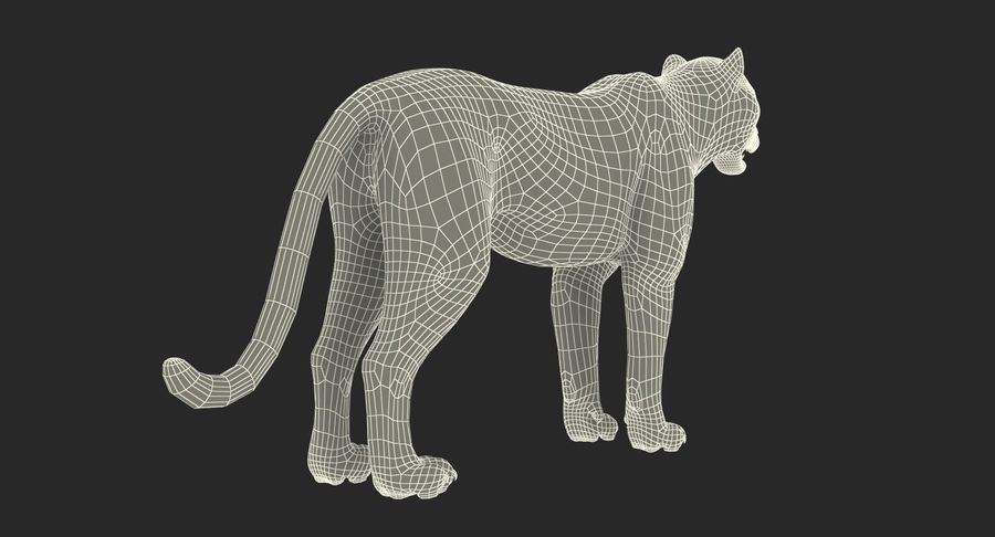 Snow Leopard with Fur Rigged royalty-free 3d model - Preview no. 27