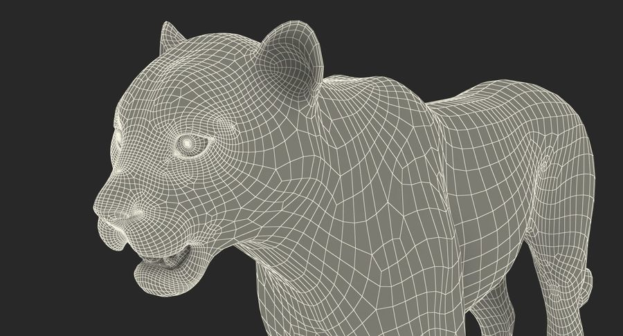 Snow Leopard with Fur Rigged royalty-free 3d model - Preview no. 30