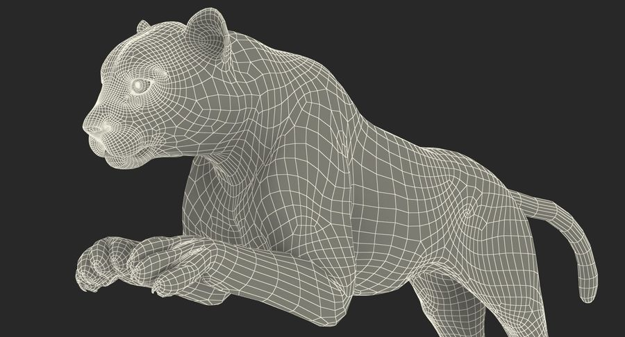 Snow Leopard with Fur Rigged royalty-free 3d model - Preview no. 31