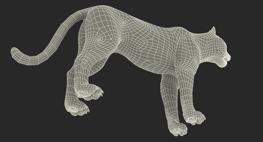 Snow Leopard with Fur Rigged royalty-free 3d model - Preview no. 35