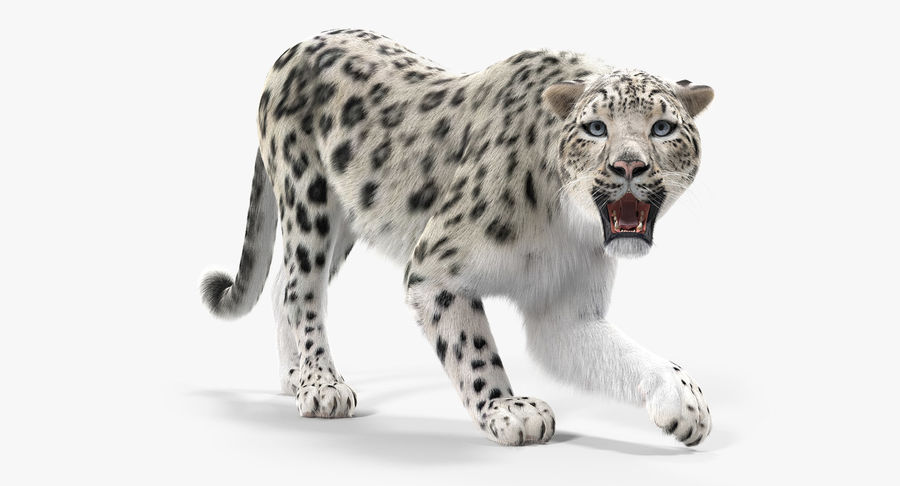 Snow Leopard with Fur Rigged royalty-free 3d model - Preview no. 2