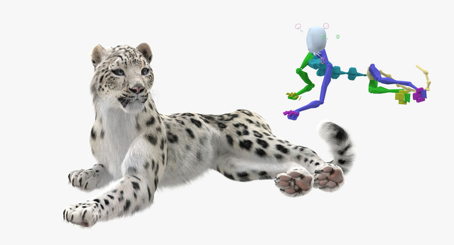 Snow Leopard with Fur Rigged royalty-free 3d model - Preview no. 3
