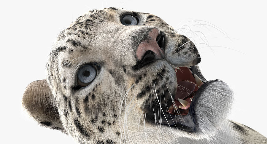 Snow Leopard with Fur Rigged royalty-free 3d model - Preview no. 15