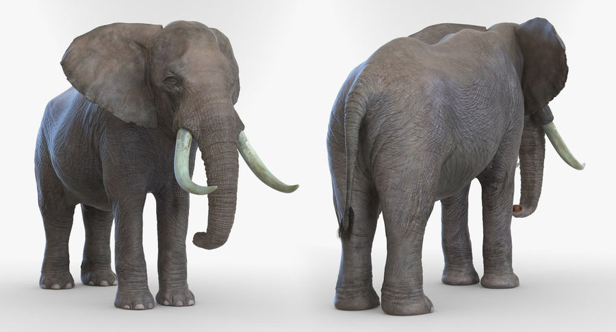 Rigged African Animals 3D Models Collection royalty-free 3d model - Preview no. 22