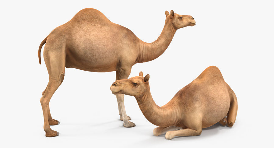 Rigged African Animals 3D Models Collection royalty-free 3d model - Preview no. 28