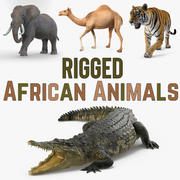 Rigged African Animals 3D Models Collection 3d model