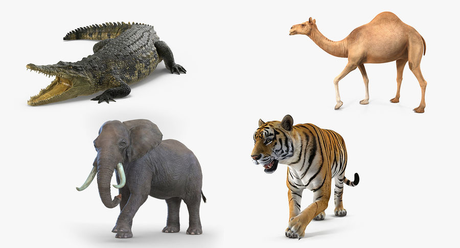 Rigged African Animals 3D Models Collection royalty-free 3d model - Preview no. 2