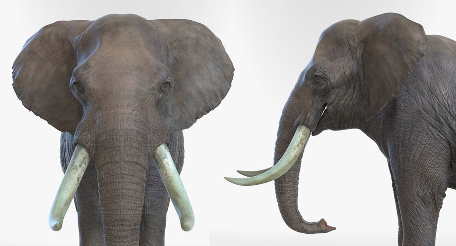 Rigged African Animals 3D Models Collection royalty-free 3d model - Preview no. 24