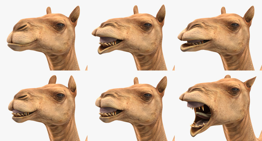 Rigged African Animals 3D Models Collection royalty-free 3d model - Preview no. 32