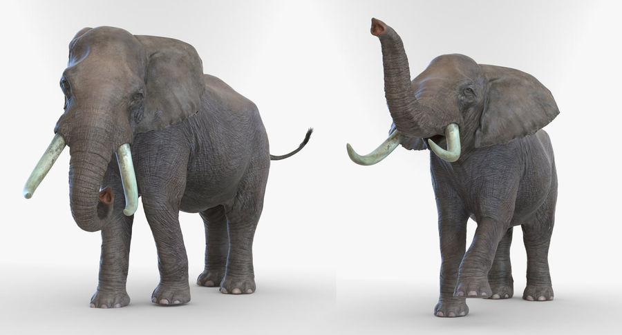 Rigged African Animals 3D Models Collection royalty-free 3d model - Preview no. 23