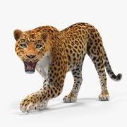 Leopard Rigged with Fur 3d model