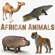 African Animals 3D Models Collection 3d model