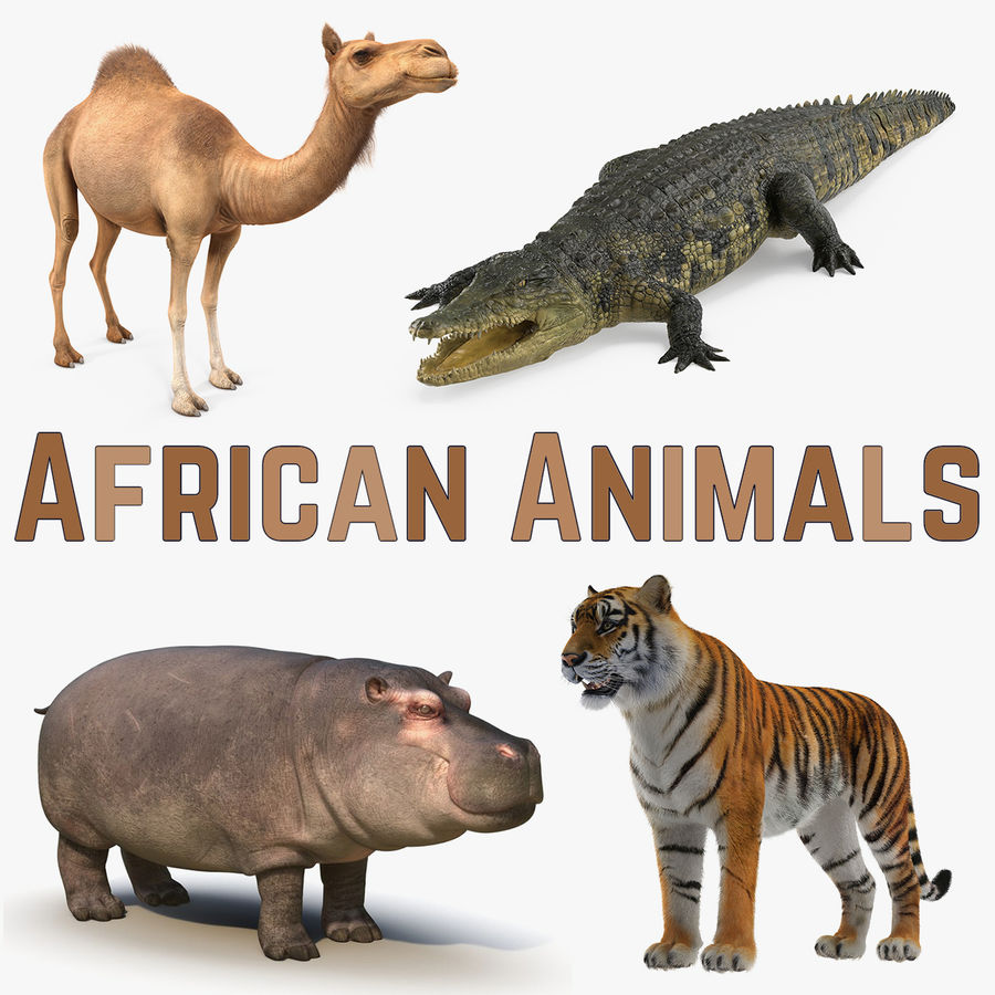 African Animals 3D Models Collection royalty-free 3d model - Preview no. 1