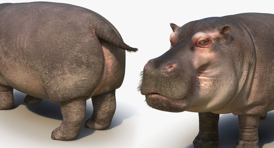 African Animals 3D Models Collection royalty-free 3d model - Preview no. 25