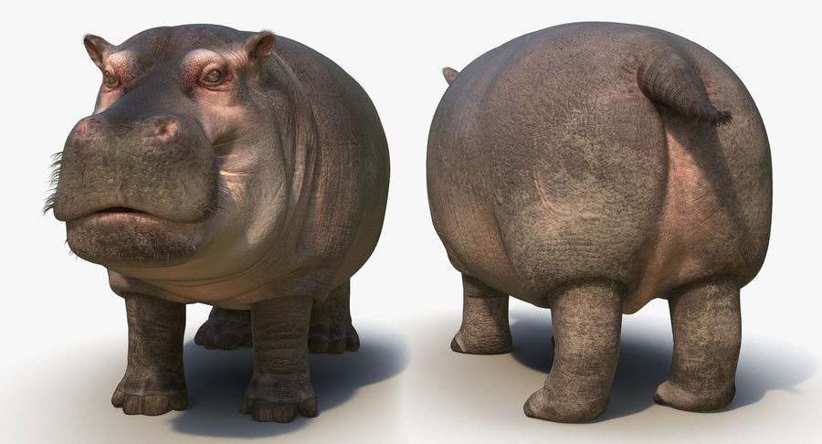 African Animals 3D Models Collection royalty-free 3d model - Preview no. 24