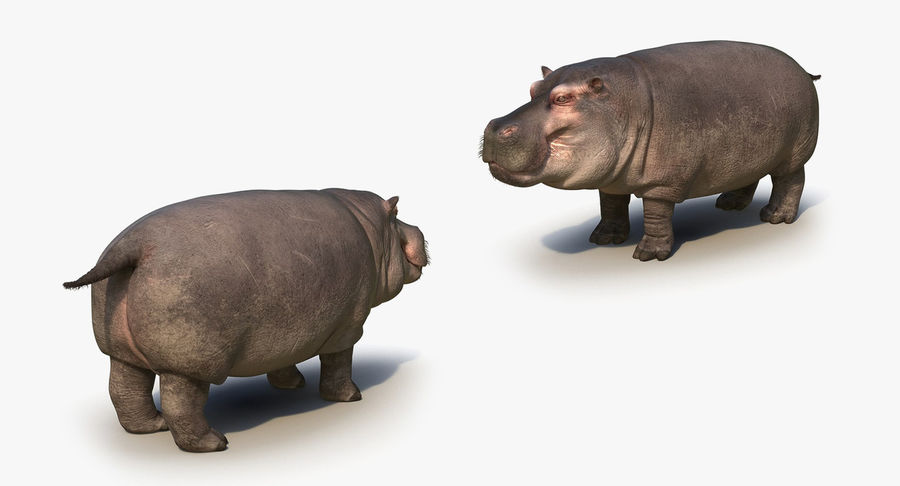 African Animals 3D Models Collection royalty-free 3d model - Preview no. 23
