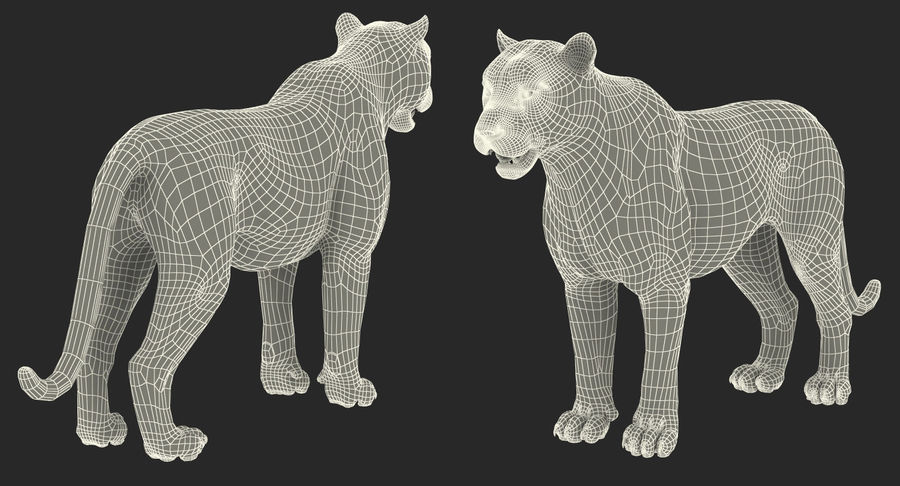 African Animals 3D Models Collection royalty-free 3d model - Preview no. 27