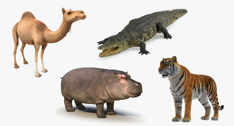 African Animals 3D Models Collection royalty-free 3d model - Preview no. 2