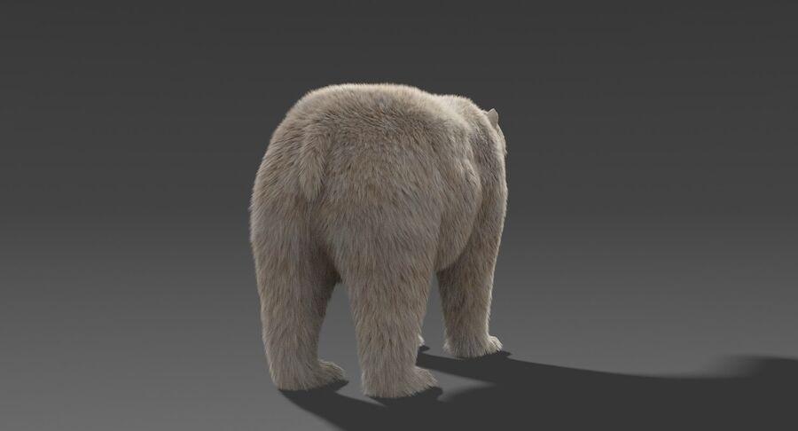 Polar Bear (Fur) royalty-free 3d model - Preview no. 11