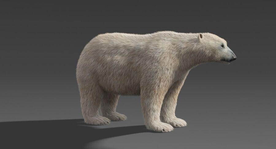 Polar Bear (Fur) royalty-free 3d model - Preview no. 10