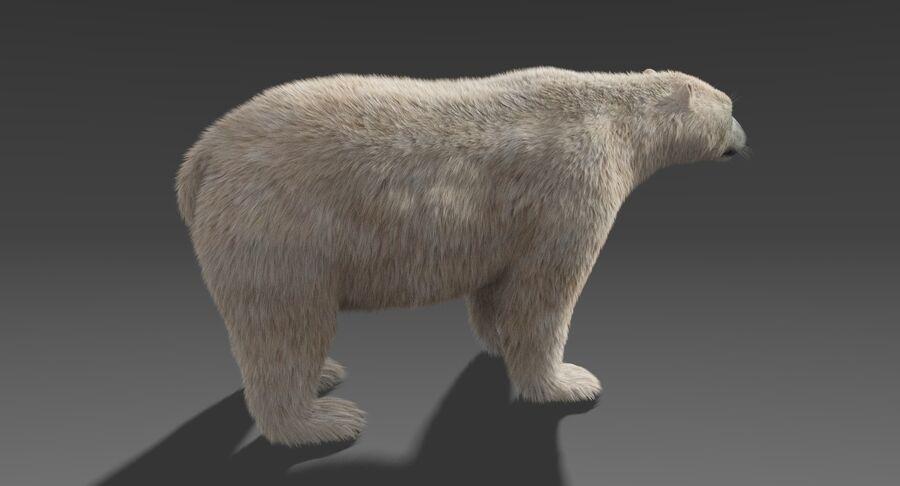Polar Bear (Fur) royalty-free 3d model - Preview no. 7