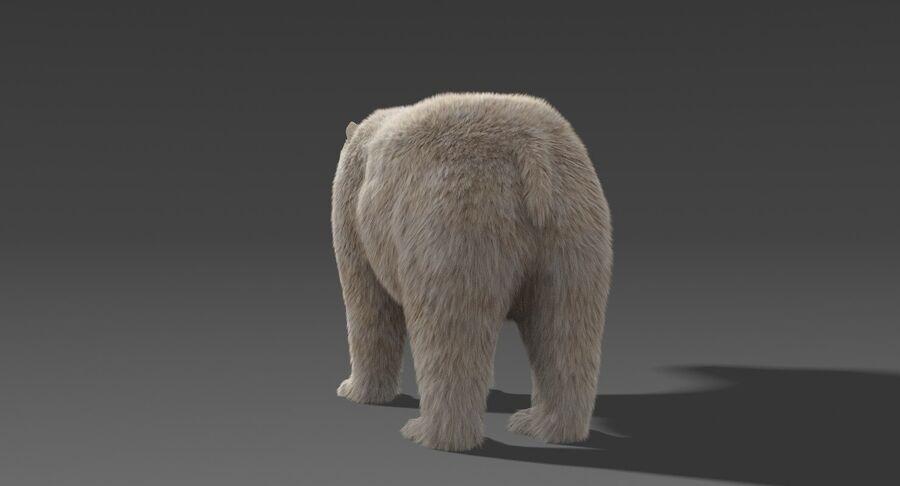 Polar Bear (Fur) royalty-free 3d model - Preview no. 8