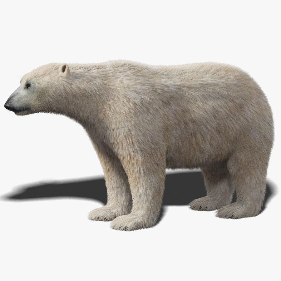 Polar Bear (Fur) royalty-free 3d model - Preview no. 1