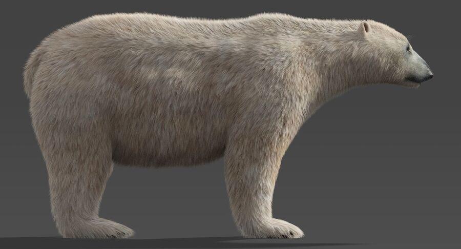 Polar Bear (Fur) royalty-free 3d model - Preview no. 4