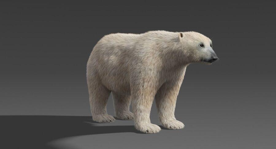 Polar Bear (Fur) royalty-free 3d model - Preview no. 9