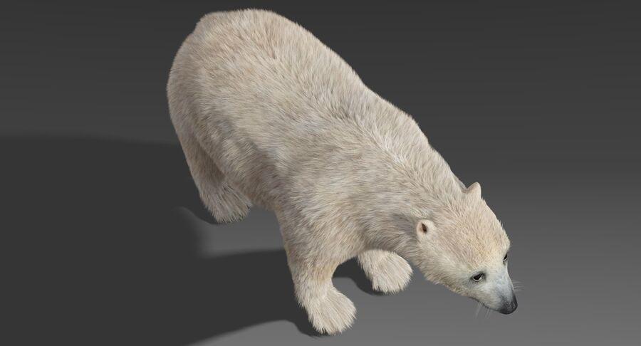 Polar Bear (Fur) royalty-free 3d model - Preview no. 6