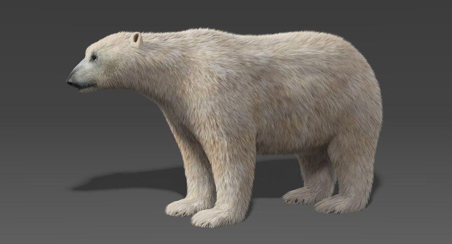 Polar Bear (Fur) royalty-free 3d model - Preview no. 3