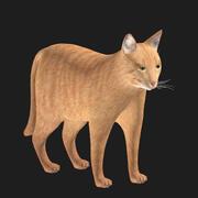 Yerli kedi 3D model 3d model