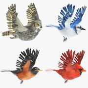 Zestaw animowanych ptaków 3d model