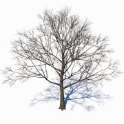 Dead tree 2 3d model