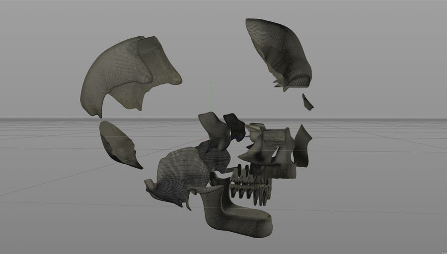 Skull royalty-free 3d model - Preview no. 17