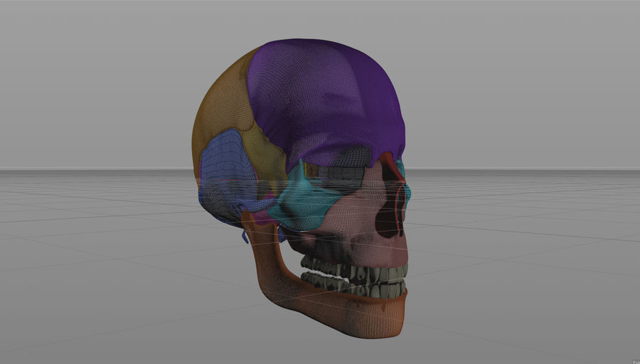 Skull royalty-free 3d model - Preview no. 11