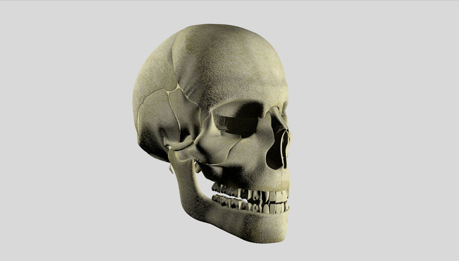 Skull royalty-free 3d model - Preview no. 21