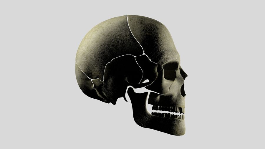 Skull royalty-free 3d model - Preview no. 2