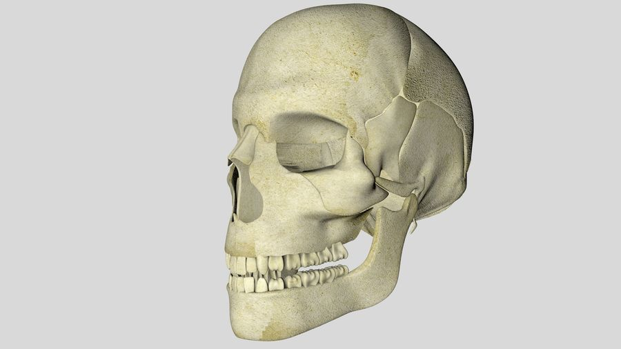 Skull royalty-free 3d model - Preview no. 6