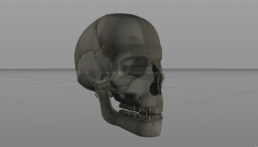 Skull royalty-free 3d model - Preview no. 20