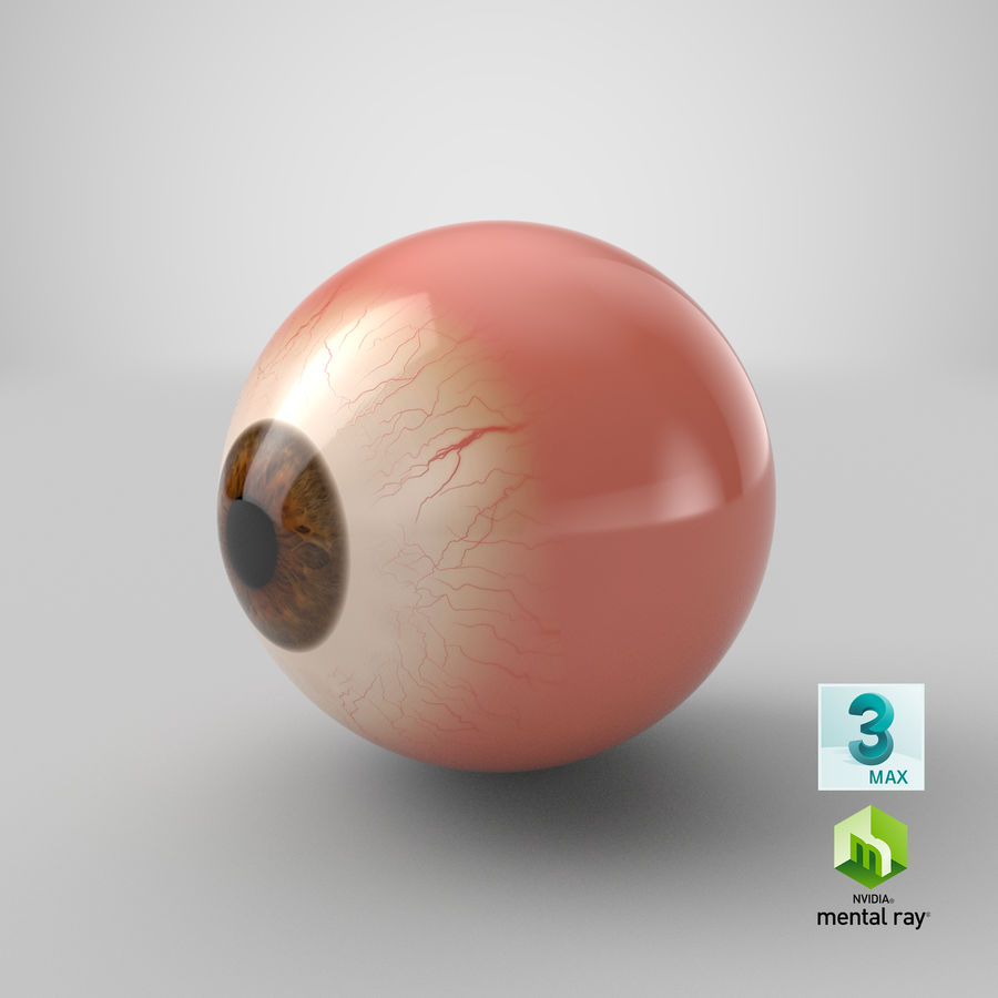 Eyeball royalty-free 3d model - Preview no. 17